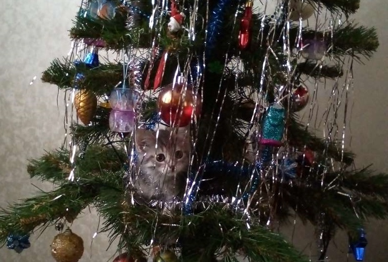 котенок на елке